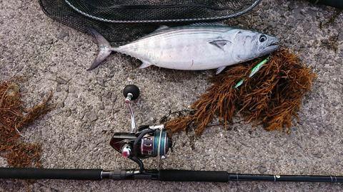 【画像】昨日釣りに行ったんだが