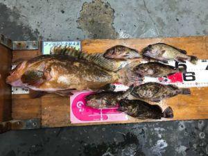 沖堤防でモンスターアコウ釣れました!