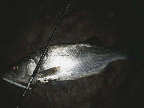 夜勤釣行!?