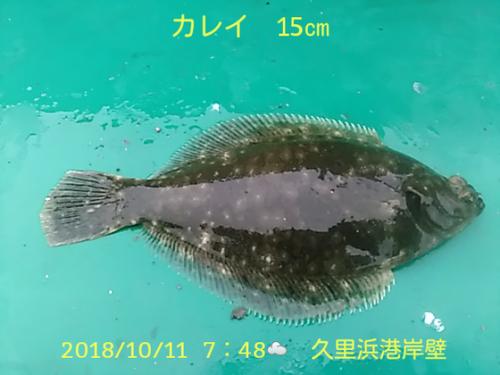 笑転爺の釣日記 10月11日☀ 久里浜港岸壁 カレイ