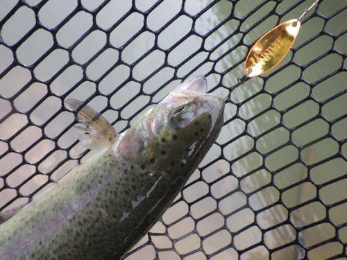 「鱒蔵」やっぱり釣れる釣り場はいいよね その2