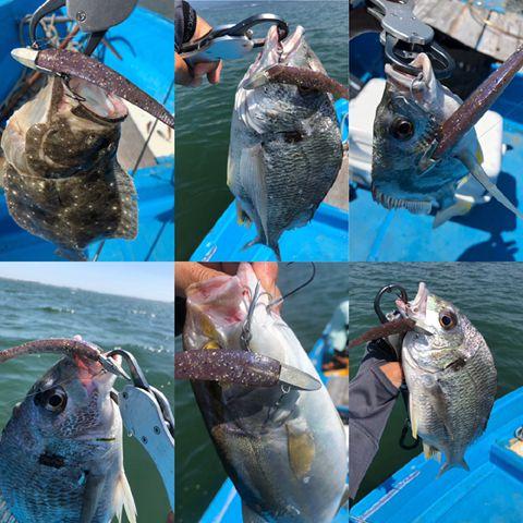 ボトムワインド釣法でキビレ連発&その他いろいろ