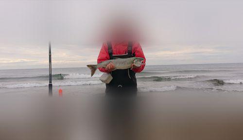 鮭釣り9戦目