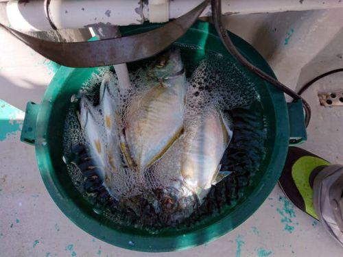 再投稿・・沖釣り、カイワリ五目釣り